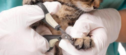 Des vétérinaires durcissent le ton face au dégriffage des chats ... - journalexpress.ca