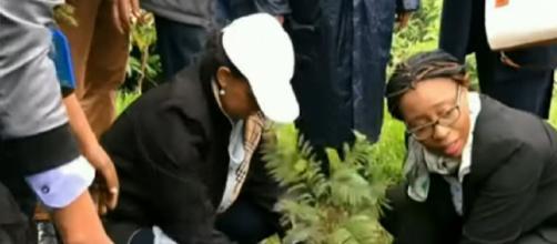 Ethiopia plants 350 million trees in a day, smashing records. [Image source/Sky News Australia YouTube video]