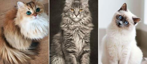 Les 50 plus beaux chats du monde en photos - parismatch.com