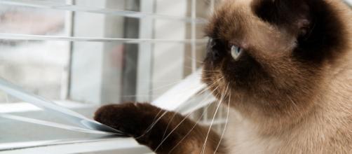 Mon chat ne sort pas : dois-je le stériliser ? | Bulle Bleue - bullebleue.fr