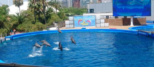 Dolphins enjoying playtime at L'Oceanogràfic, Valencia. Picture by Claire Jane Baston