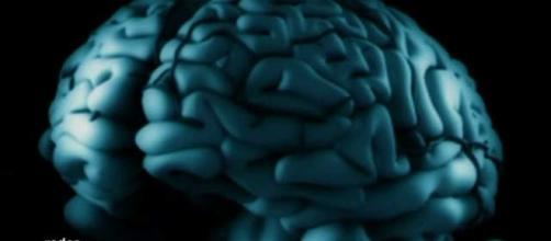 Estudios del cerebro humano evidencian la necesidad evolutiva de cooperación colectiva