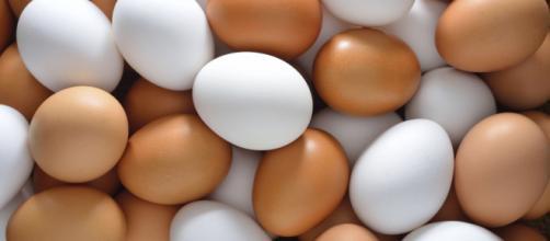 El huevo es uno de los alimentos preferidos en muchos menús diarios. - mundotkm.com