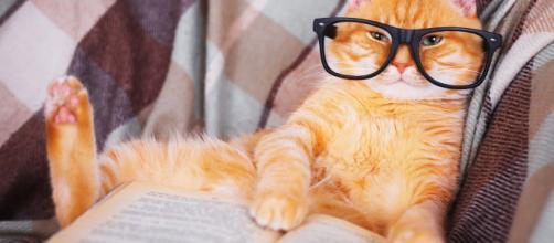 5 signes qui montrent que votre chat est intelligent - Photo publiée par catizz