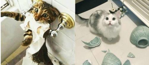 6 chats qui font des bétises quand leur maitre n'est pas là - photo publiée sur ohmymag et animaals