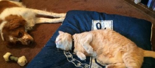 Ces chiens qui aimeraient dormir mais le chat en a décidé autrement - Photo publiée sur Animaals