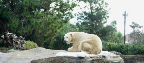 Crisi climatica: in Alaska, ad Anchorage, raggiunti i 32.2 gradi