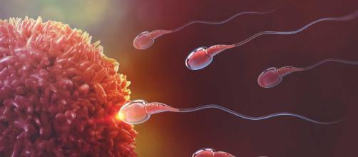 La fecundación: el origen de un nuevo individuo.. - blogdebebes.com