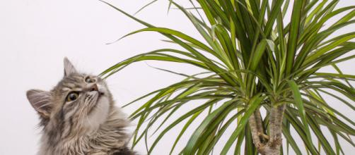 Plantes toxiques chez le chat : Vetissimo - vetissimo.fr