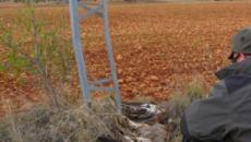 La Fiscalía exige actuar contra la muerte de miles de aves en los tendidos eléctricos