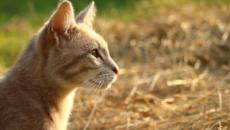 6 rituels à prendre de son chat pour être heureux