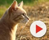 Image libre: animal, mignon, chat, nature, été, foin, chaton ... - pixnio.com