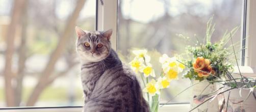 Comment faire garder son chat pendant les vacances ? | Bulle Bleue - bullebleue.fr