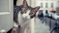 Bientôt un nouveau remède pour ceux qui sont allergiques aux chats