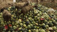En España se tiran 1.300 millones de kilos de comida a la basura cada año
