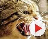 Fond d'écran : visage, colère, faune, les dents, nez, moustaches ... - wallhere.com