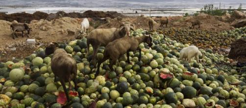 En España se tiran 1.300 millones de kilos de comida a la basura cada año.