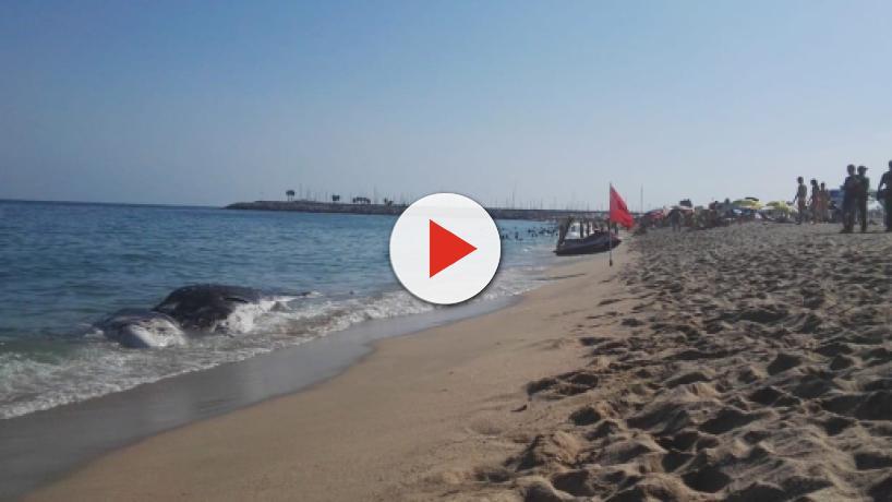 Una ballena muerta aparece en Mataró