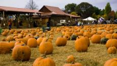 'LPBW': Roloff Farms Pumpkin Season 2019 opens October 4