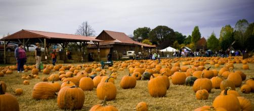 Best Pumpkin Patches Near Portland Image credit - redtri.com via Blasting News Library