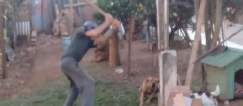 Idoso é condenado a pagar multa por agressão. (Divulgação/ Guarda Municipal)