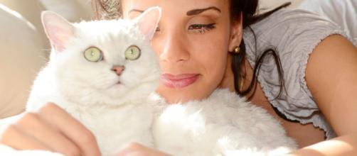 Ronronnement du chat - Comment et pourquoi les chats ronronnent ... - doctissimo.fr