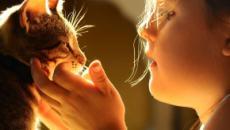 Cohabitation entre chat et enfant : les idées reçues en 5 points