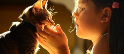 La relation du chat avec un enfant | Bulle Bleue - bullebleue.fr