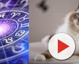 Le signe astrologique qui défini la race du chat