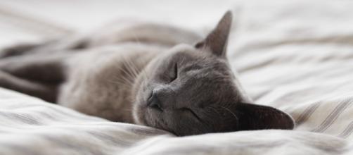 Dormir plus intelligemment : 19 astuces pour améliorer votre ... - medium.com