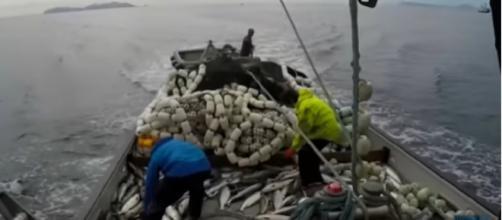Amazing salmon fishing boat in Alaska, Big Catch Net Fishing on the Sea! [Image source/Deep Sea Fishing Life YouTube video]