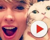 Publier une photo de son chat sur Instagram a de graves conséquences - photo publiée par le telélgraph