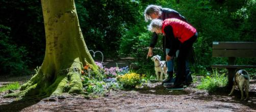 Olanda, confessa il killer dei padroni dei cani: 'Me l'hanno ordinato delle voci' | nrc.nl