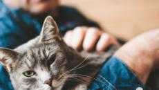 Les célibataires de longue date combleraient leur manque d'amour avec l'aide des chats