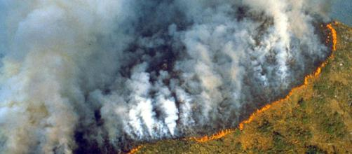 Fires could turn Amazon rainforest into a desert as human activity ... - independent.co.uk