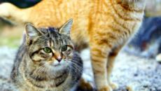 Réussir la cohabitation entre chats en 7 points
