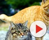 Image libre: deux chats mignons, chatons - pixnio.com