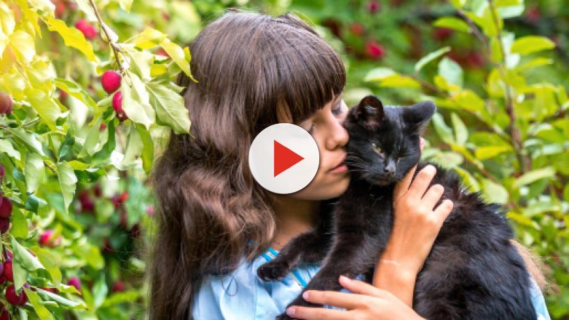 Faire face à la mort de son chat