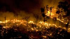 Hashtag de apoio à Amazônia viraliza mundialmente nas redes sociais