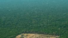 Incendio Amazzonia, scienziato attacca Bolsonaro: 'Non possiamo restare in silenzio'