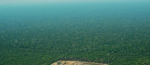 L'Amazzonia brucia: il disastro è sempre più vicino