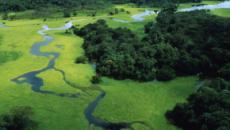 Foresta Amazzonica in fiamme, il nostro Polmone Verde è in grave pericolo