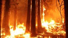 Amazzonia, la foresta continua a bruciare: preoccupazione in tutto il mondo