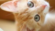 6 choses à ne pas faire à un chat car elles pourraient déclencher sa fureur