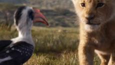 Il Re Leone dal cinema alla realtà, allarme WWF: 'Tra 25 anni Simba potrebbe estinguersi'