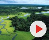 Allarme deforestazione per l'Amazzonia: ecco perché il polmone ... - meteoweb.eu