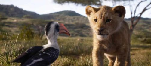 Grande successo per Il Re Leone che in natura però rischia l'estinzione