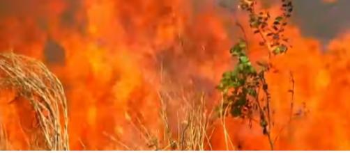 Record wildfires rage in Amazon rain forest. [Image source/ABC News YouTube video]