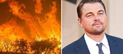 Roghi in Amazzonia: gli appelli social delle star di Hollywood