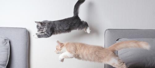 Votre chat fait-il assez d'activité physique ? | My Pet's Health - vetoquinol.com